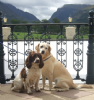 The Dunloe Pet Friendly Hotel Co. Kerry Ireland
